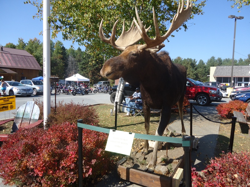 2014 Moose Festival